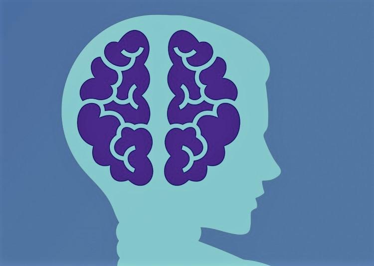 Les fruits de mer aident au bon fonctionnement du cerveau