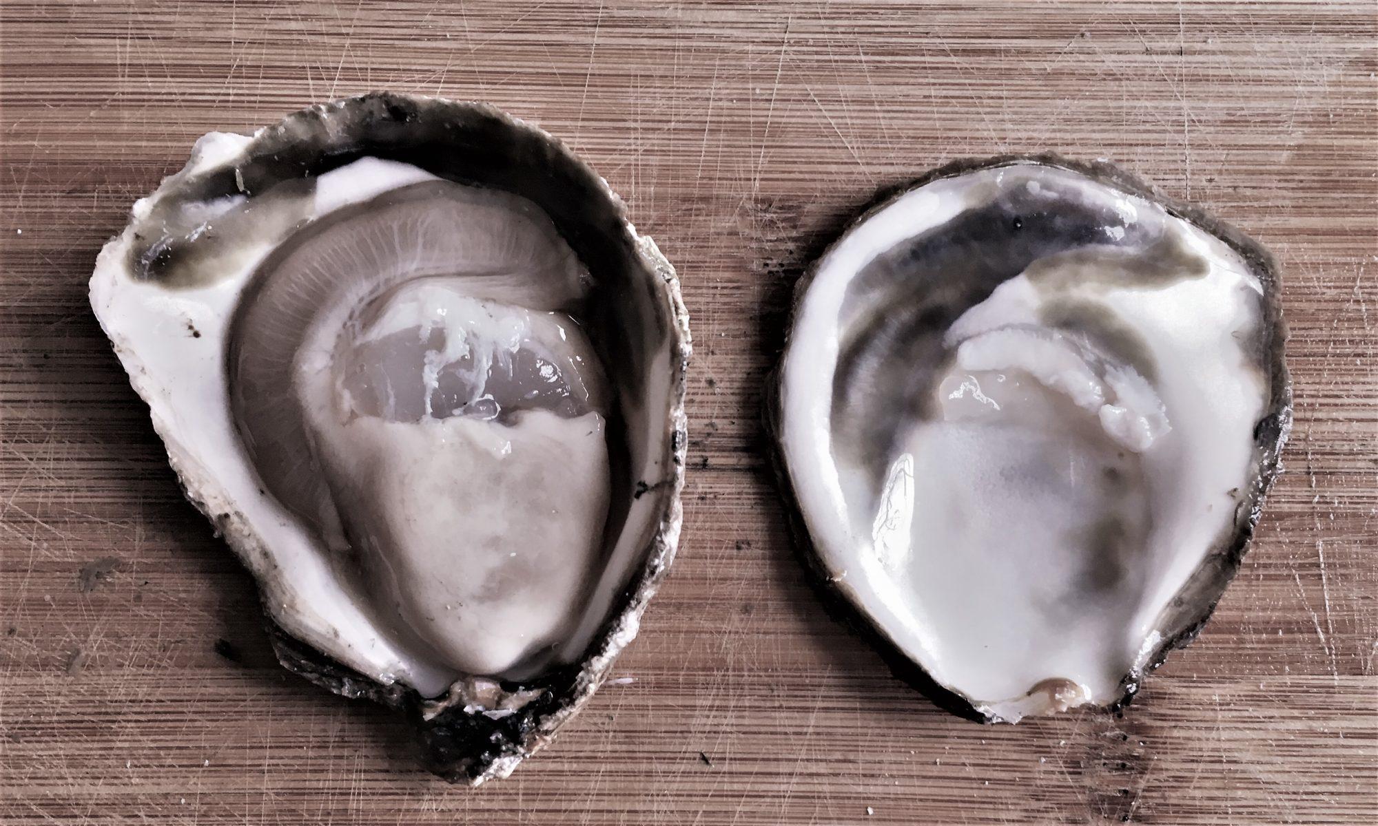 Présentation des huîtres par le Pub de Carqueiranne